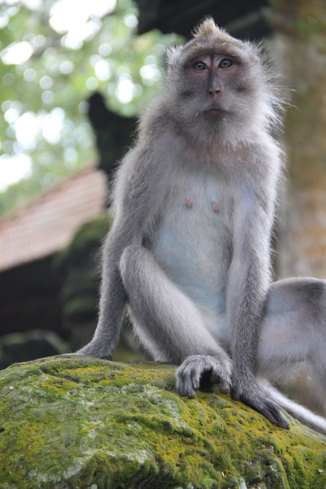 Monkey forest (6)
