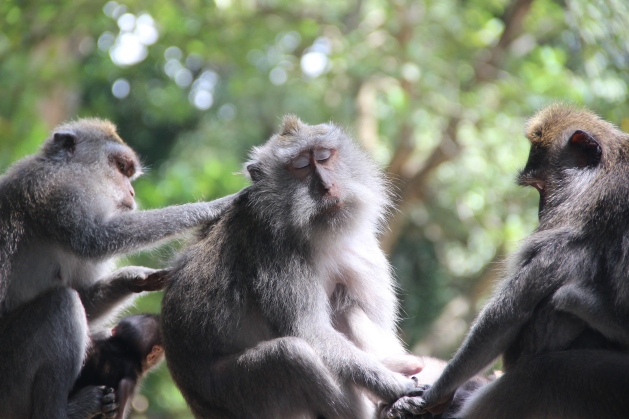 Monkey forest (71)